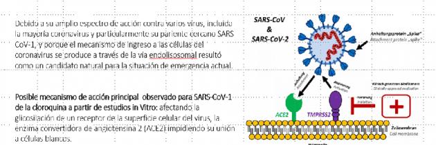 Efectos antivirales de la Cloroquina contra Coronavirus (COVID-19)(SARS-CoV-2)